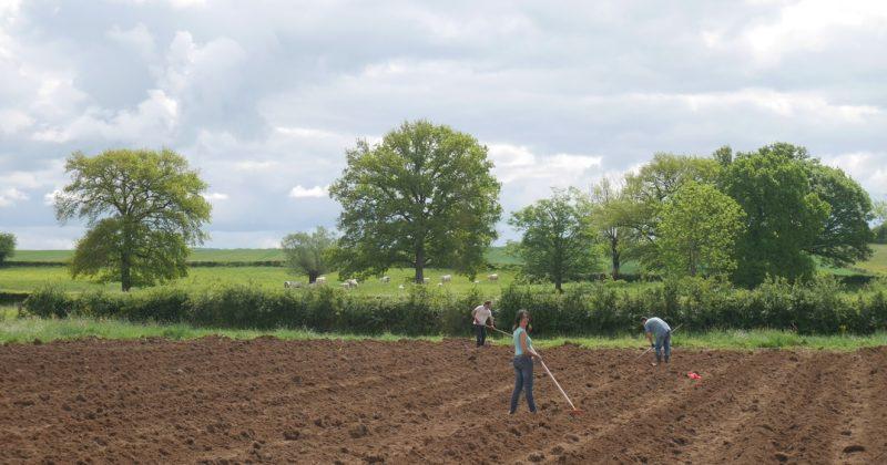 un petit point de mai et la plantation des patates!